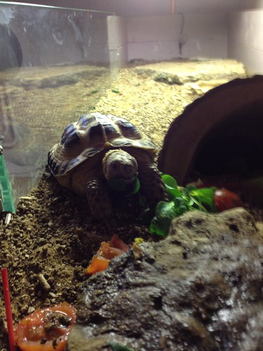 Charlie the Tortoise 2