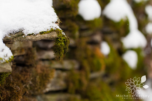Moss and snow covered Farm Rock Wall