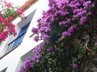 Fotografía de Cadaqués (Gerona)