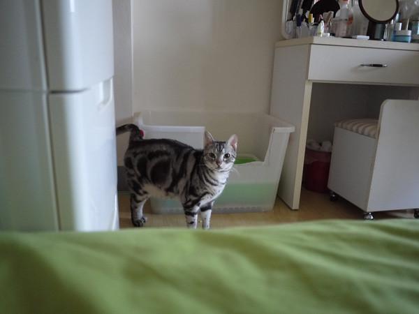 2叩逃:這種事叫貓奴作就好了,我只要裝白目每天早上六點半叫我娘起床,就有人幫我開了啊~
