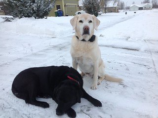 Max & Zoey after shoveling