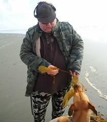 Billy feeding Rosie kelp for lunch, beach, Ocean Shores, Pacific Ocean, Washington, USA