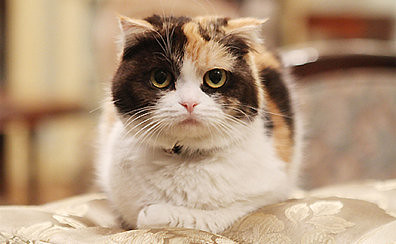 《三色貓福爾摩斯的推理》(三毛猫ホームズの推理)