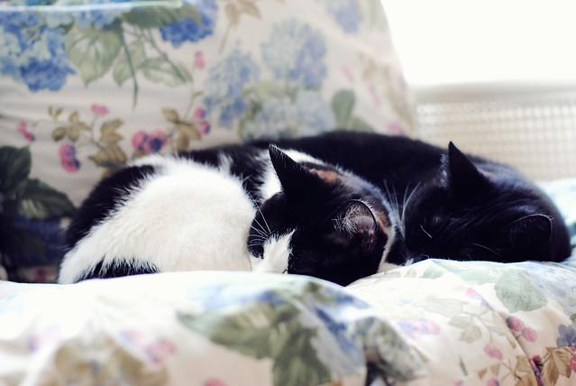 Moos and Frutsel