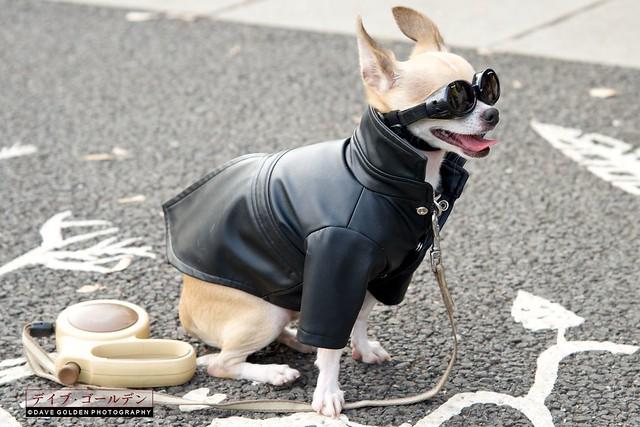 Rockabilly Dog