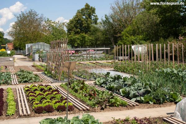 Anlage eines Nutzgartens mit Gemüse zu Schauzwecken
