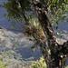 Orchid with fruit and aerophytes - Orquidea con fruta y aerofitos; entre San Juan Tabaá y Villa Alta, Districto Villa Alta, Región Sierra Juárez, Oaxaca, Mexico por Lon&Queta