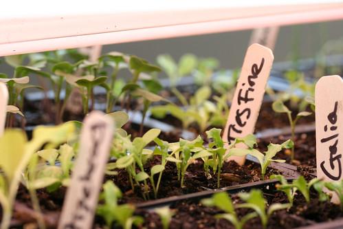 seedlings 029
