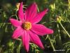 Logroño 25 flor