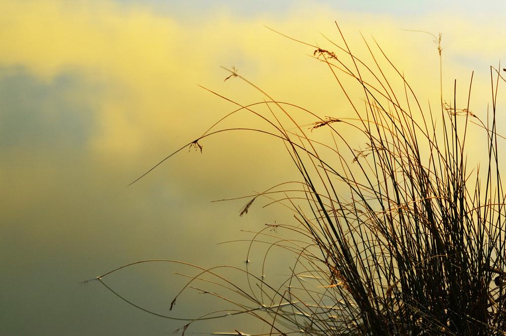 Nikon D3200 Billy clapham nature photography