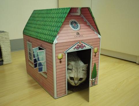 1登楞!QQ的新貓屋來囉~
