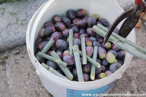 Como aliñar aceitunas paso a paso. www.cocinandoentreolivos (29)