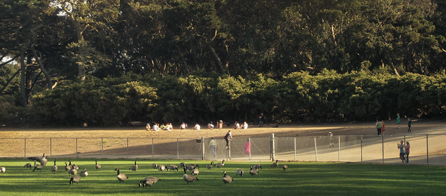 Polo Fields at Golden Gate Park, San Francisco (2013)