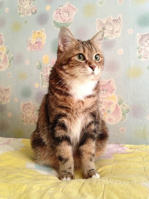 кошка Сказка