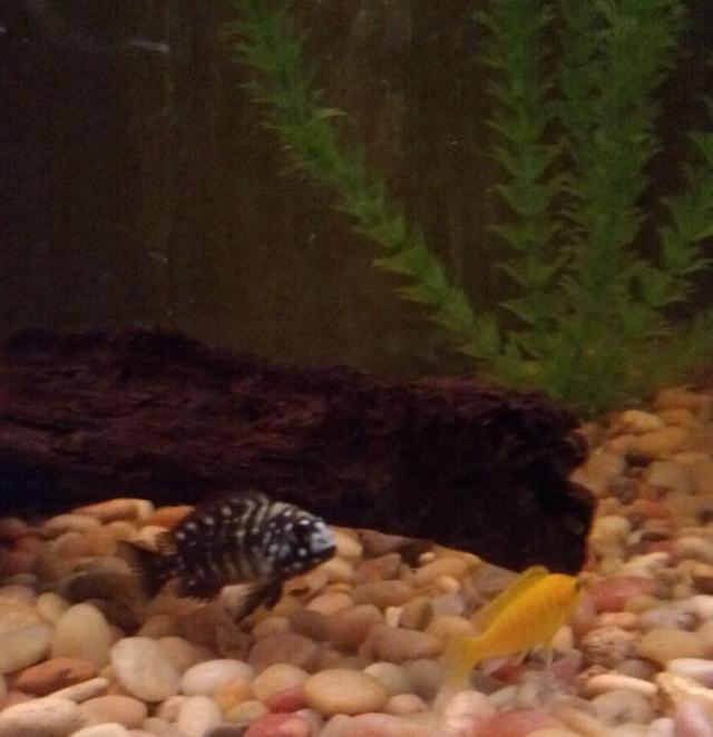 new-fish-mclovin-charlie-brown