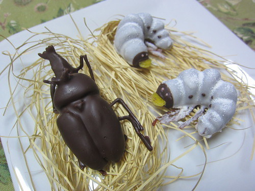 幼虫チョコ