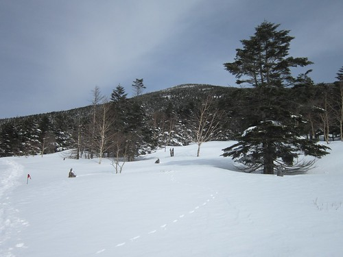 狐の足跡と縞枯山 2013年2月14日10:34 by Poran111