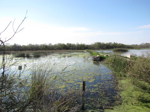 Santa Ana Wildlife Refuge-6