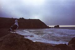 West Sea Coast Cliffs with Sea Gull