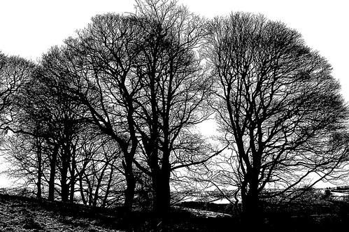 Hardwick Park 2 bw by birbee