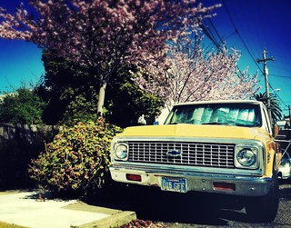 Our neighbors '72 Chevy truck in spring-blooming San Francisco