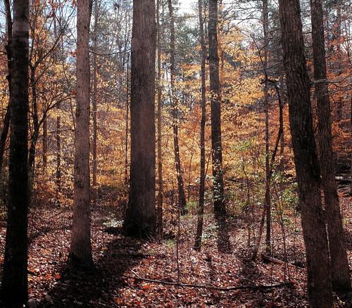 trees light tree nature leaves southcarolina 40mm greenville 60d