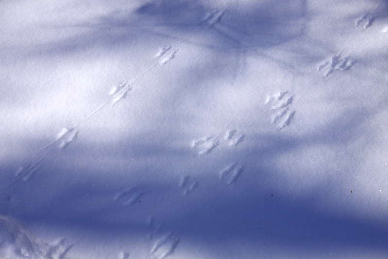 mouse tracks