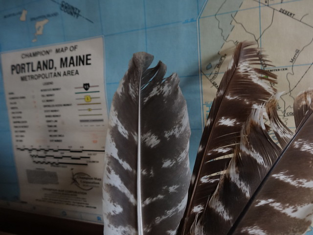 map and feathers