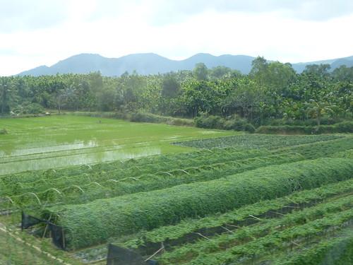 Hainan 13-Haikou-Sanya-Train (121)