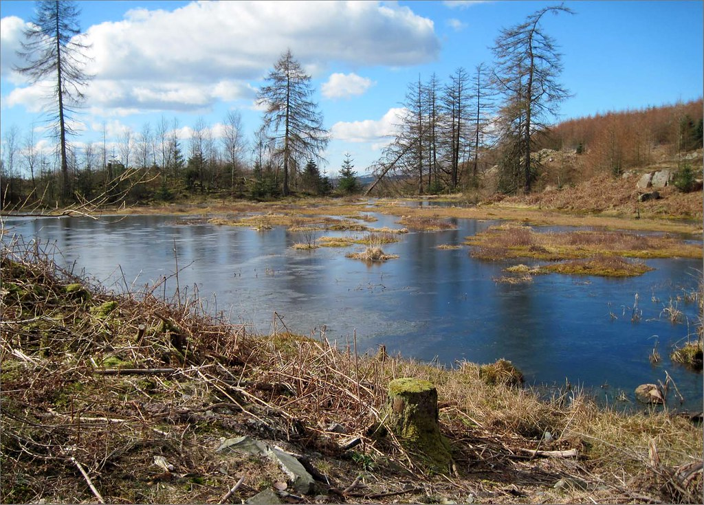 Brownstone Tarn