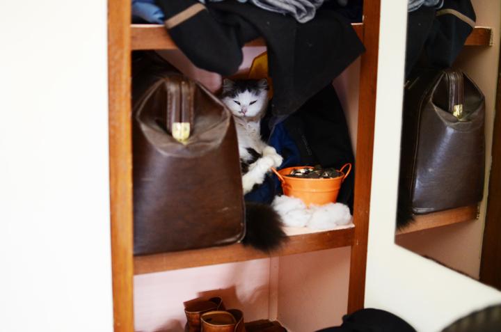 babycat cupoard