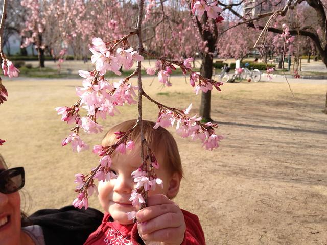 First hanami picnic 2013