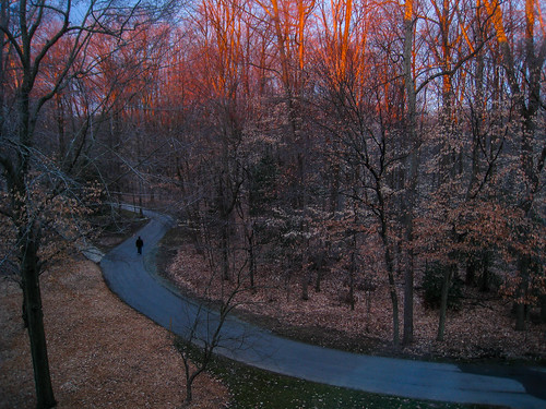 trees sunrise md path walk maryland potomac postal bolger bolgercenter