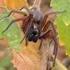 Hello Mr. Spider