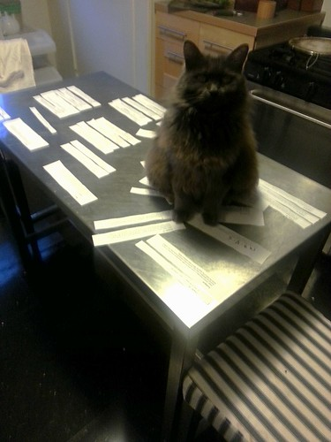 A steel table top covered with strips of paper and a big gray cat sitting on them
