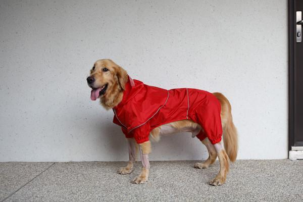 雨衣-10
