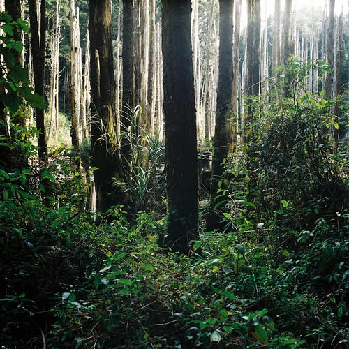 [フリー画像素材] 自然風景, 森林 ID:201301171200