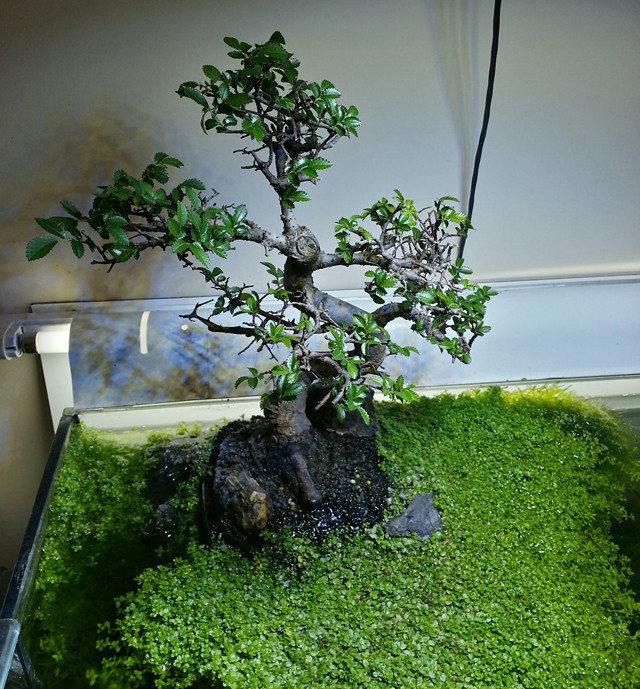 Aquario_Bonsai20121202_210719_3
