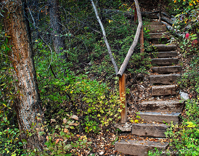 an aged and rustic stairway through an enchanted forest