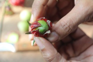 Roselle fruit+calyces