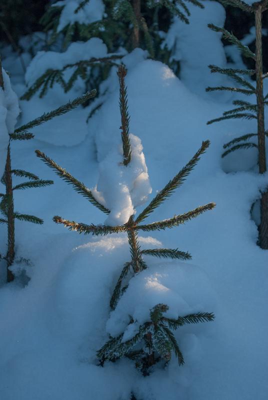 Морозное утро DSC_5600
