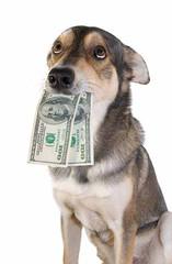 perro que lleva dinero
