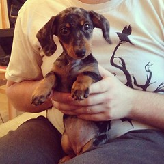 More puppy spam #lolathesausage
