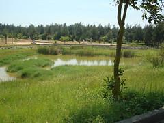 原考慮作為野放最佳地點的雙鯉濕地。(圖片來源:金門國家公園管理處)