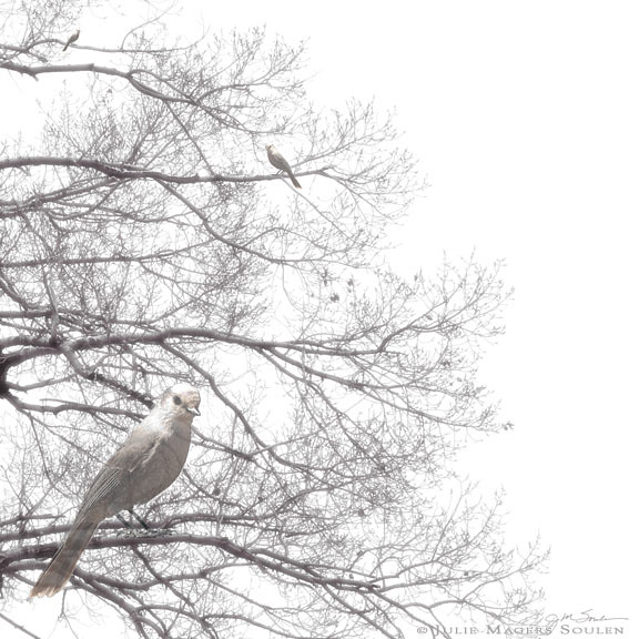 Three dreamy love birds are perched in a wispy bare tree branches.
