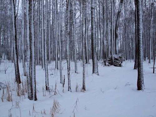 winter white snow tree estonia estland viro estonie эстония saadjärv tartumaa vanagram äksi εσθονία