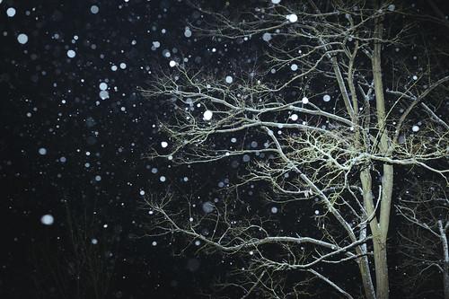 [フリー画像素材] 自然風景, 樹木, 雪, 風景 - 日本 ID:201302202000