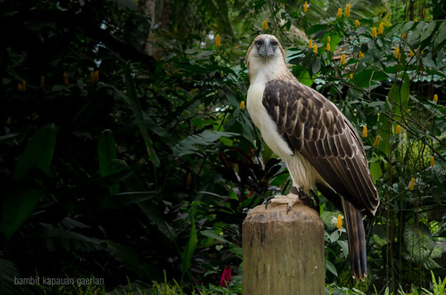 A day at the Philippine Eagle Center by Saito and Satomi