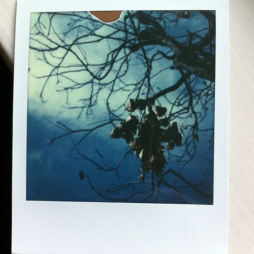 Instant tree branches #impossibleproject