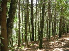 台灣估計約有40萬公頃人造林可供林業使用。